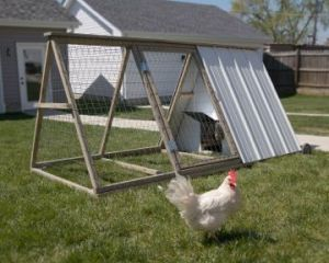 The Easy Chicken coop and hens. Photo courtesy The Easy Chicken.