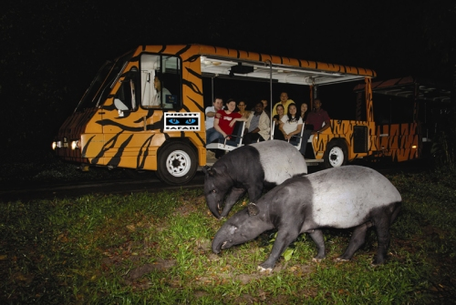"The preliminary concept of a ""night zoo"" to see nocturnal animals would allow the Saint Louis Zoo and Grant's Farm to reach more people with conservation messages and provide opportunities for people to connect with nature. Photo credit: Night Safari in Singapore"