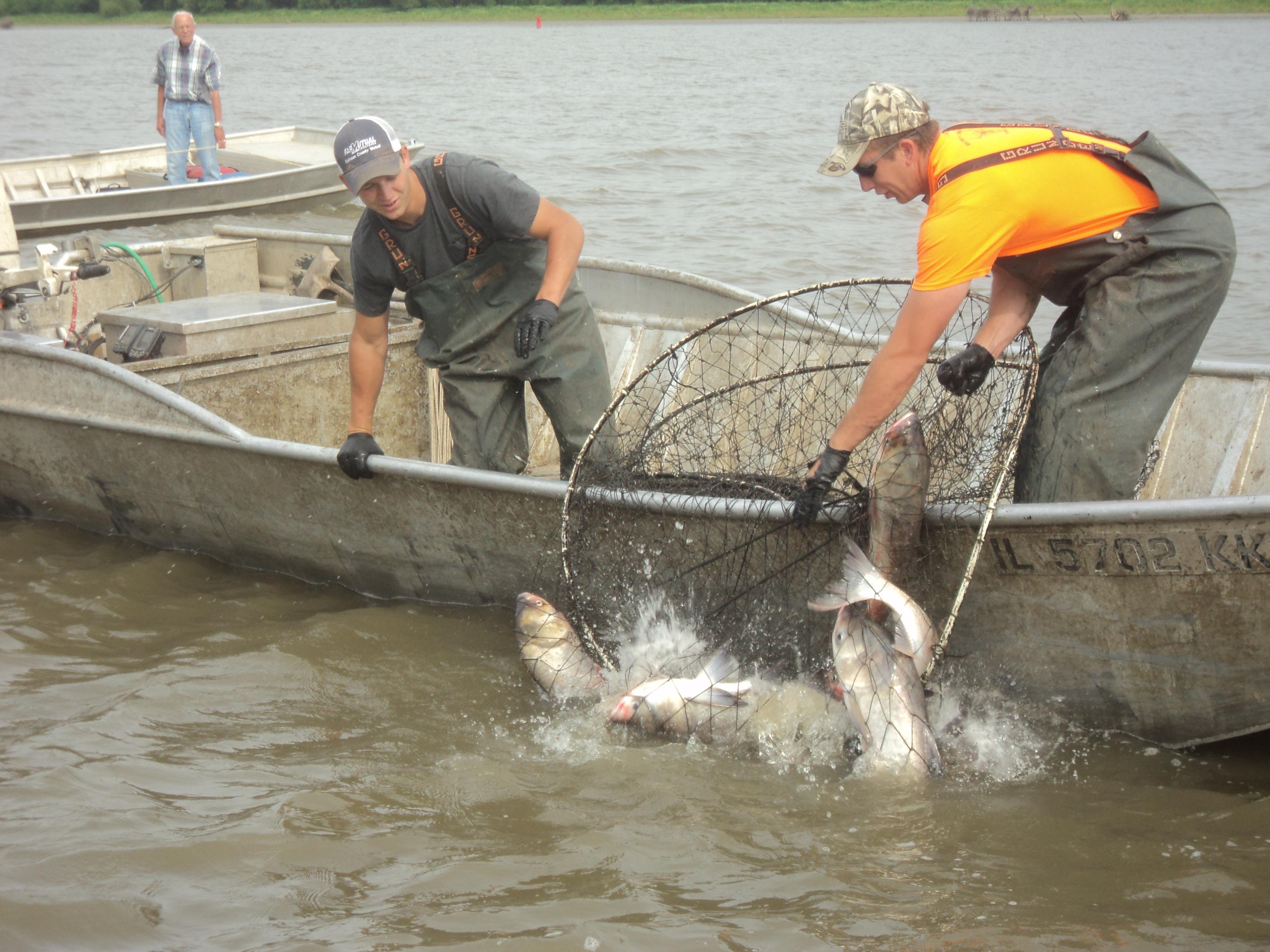 Asian carp invasion