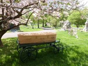 Wicker Casket is a environmentally friendly choice for use in natural burials. Photo curtosy Gracie MacDonell, Bellefontaine Cemetery.