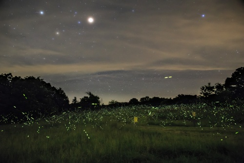 Stars and Fireflies - Photo courtesy MDC.