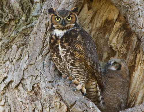 Photo by MDC Staff, courtesy Missouri Department of Conservation.