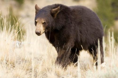 Bear MDC May 2021 2