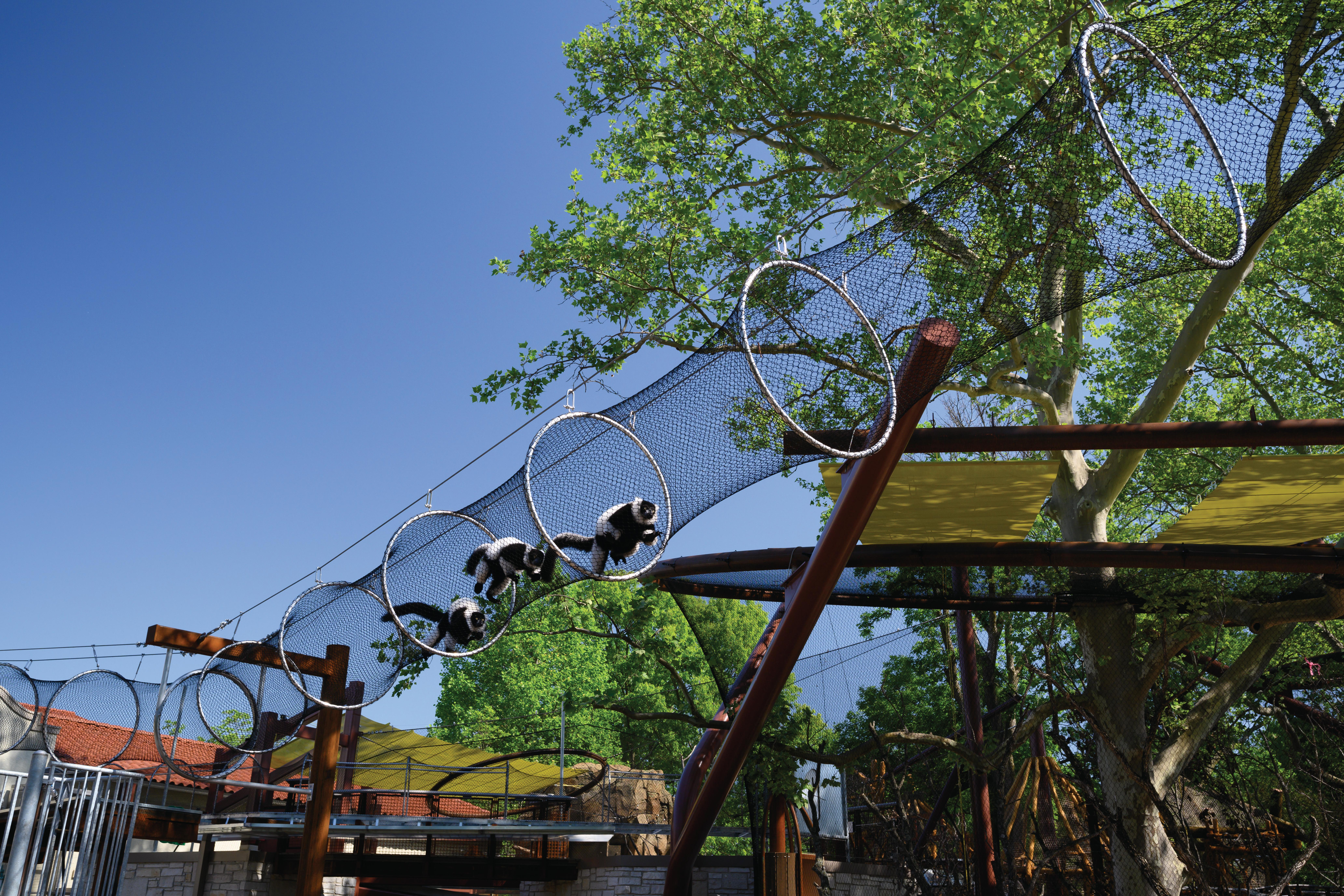 Primate Canopy Trails during construction.
